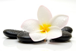 black zen stones with frangipani flower